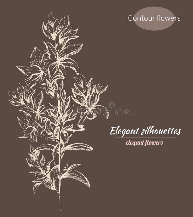 设置等高传染媒介花 墨水画的Veronica福摩萨剪影 单色花卉样式 等高Clipart为使用 库存例证