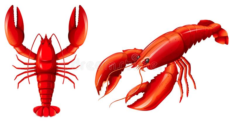 设置红色龙虾 向量例证
