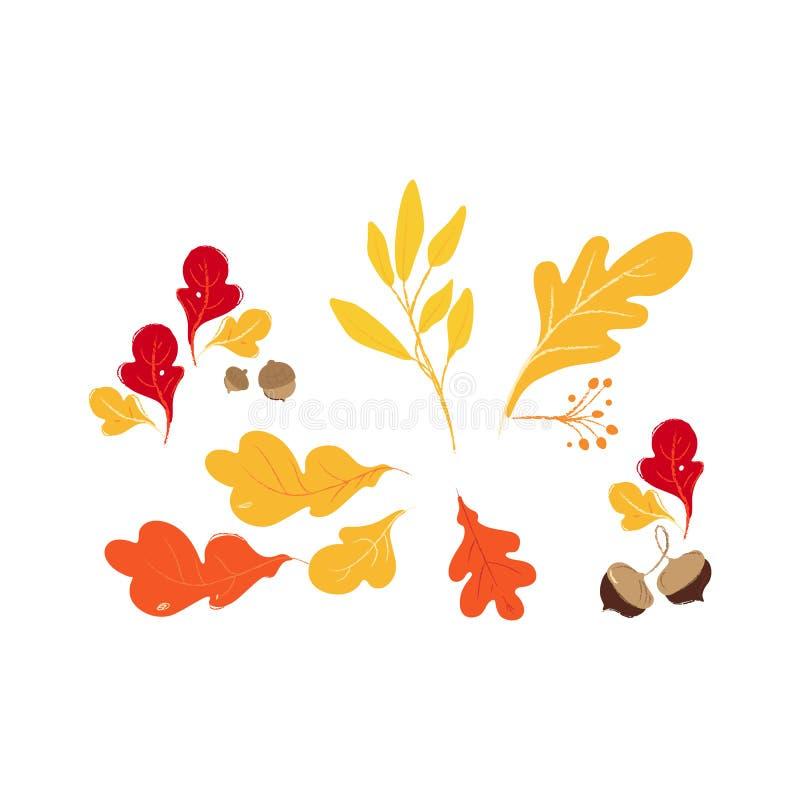 设置红色,橙色和黄色秋天和秋天橡木森林叶子和棕色橡子 向量例证