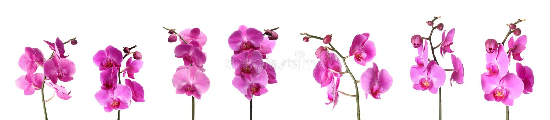 设置美丽的紫色兰花兰花植物花 免版税库存照片