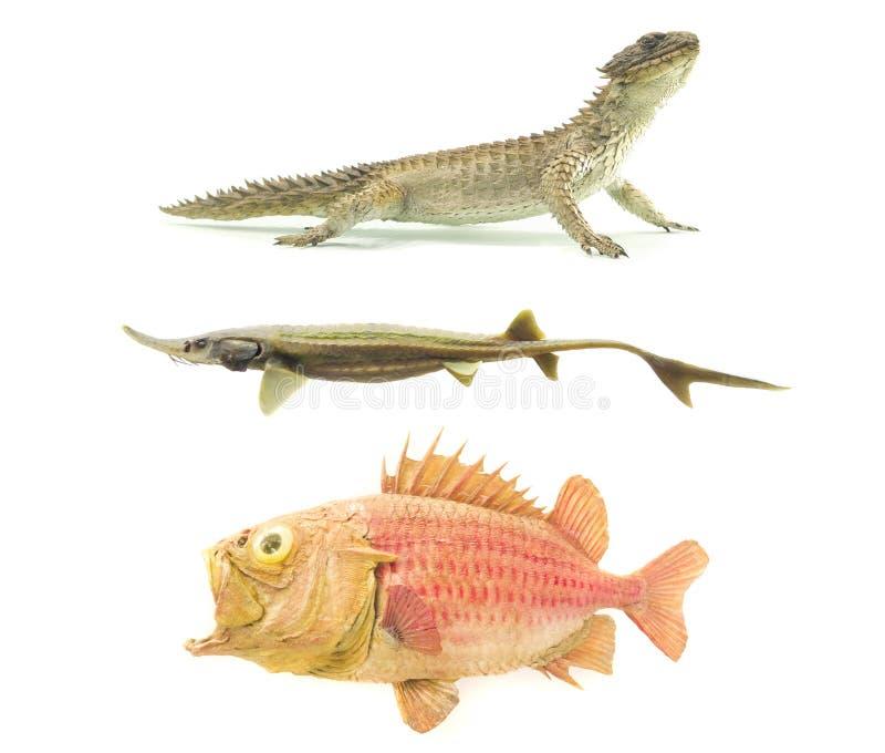 设置老古老鱼和爬行动物 图库摄影
