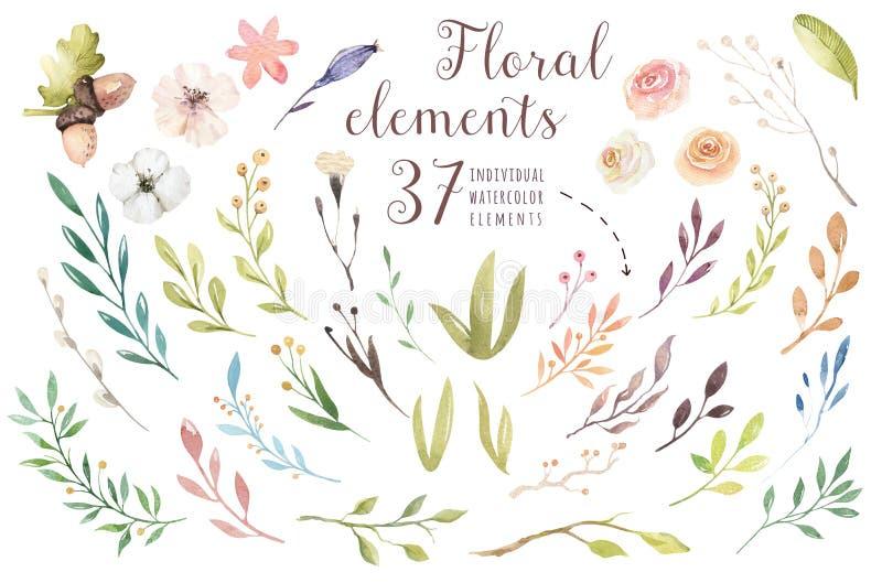 设置葡萄酒水彩花,庭院的绿色元素,并且野花,叶子,分支开花,例证 皇族释放例证