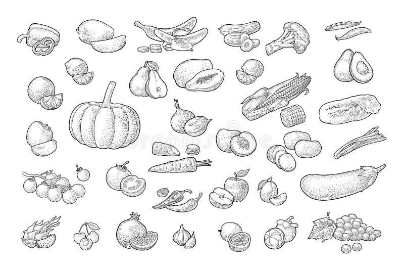 设置蔬菜和水果 r 向量例证