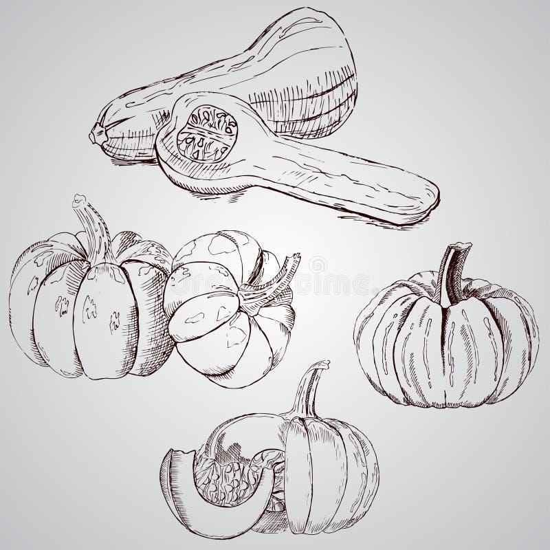 设置蔬菜 新鲜的食物 在白色背景画的南瓜线 库存例证
