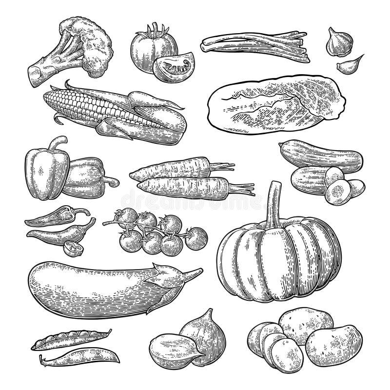 设置蔬菜 黄瓜、大蒜、玉米、胡椒、硬花甘蓝、土豆和蕃茄 库存例证