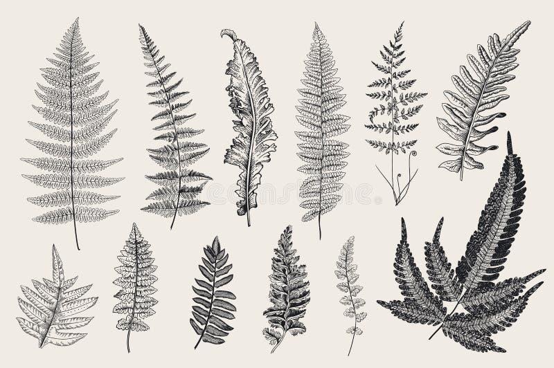 设置蕨 12片叶子 葡萄酒植物的例证 库存例证