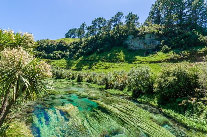设置Te Waihou走道的蓝色春天,哈密尔顿新西兰 库存照片