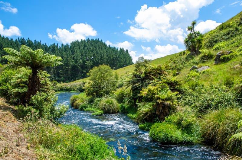 设置Te Waihou走道的蓝色春天,哈密尔顿新西兰 免版税图库摄影