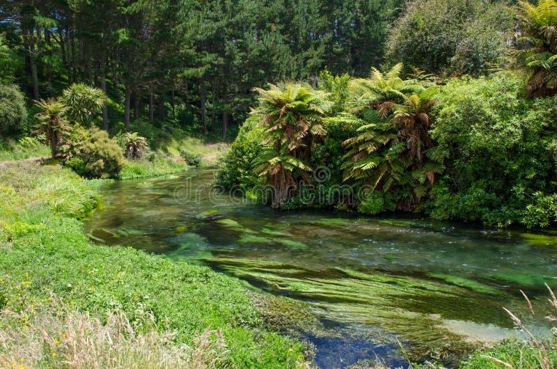设置Te Waihou走道的蓝色春天,哈密尔顿新西兰 免版税库存图片