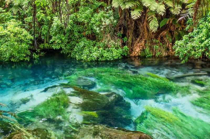 设置Te Waihou走道的蓝色春天,哈密尔顿新西兰 图库摄影