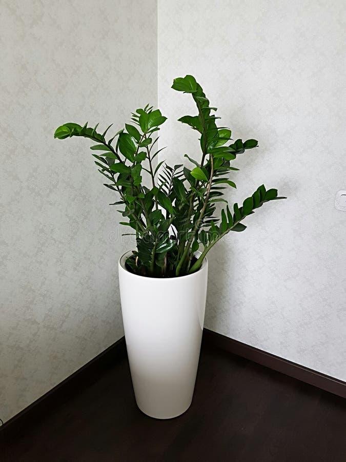 设计与一朵活花的一个室角落 免版税库存图片