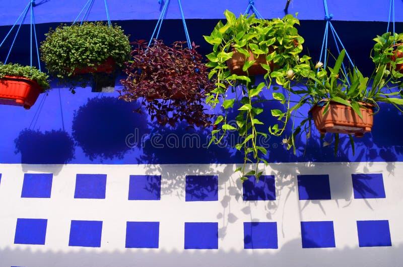 设计内部的好植物 免版税库存图片
