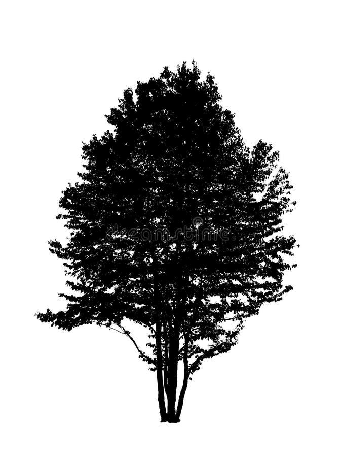 设计合并剪影纹理结构树使用 图库摄影