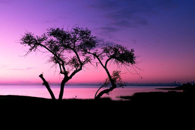 设计合并剪影纹理结构树使用 免版税库存图片