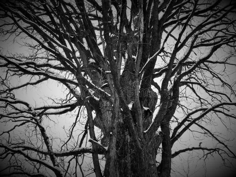 设计图象结构树冬天 免版税库存图片