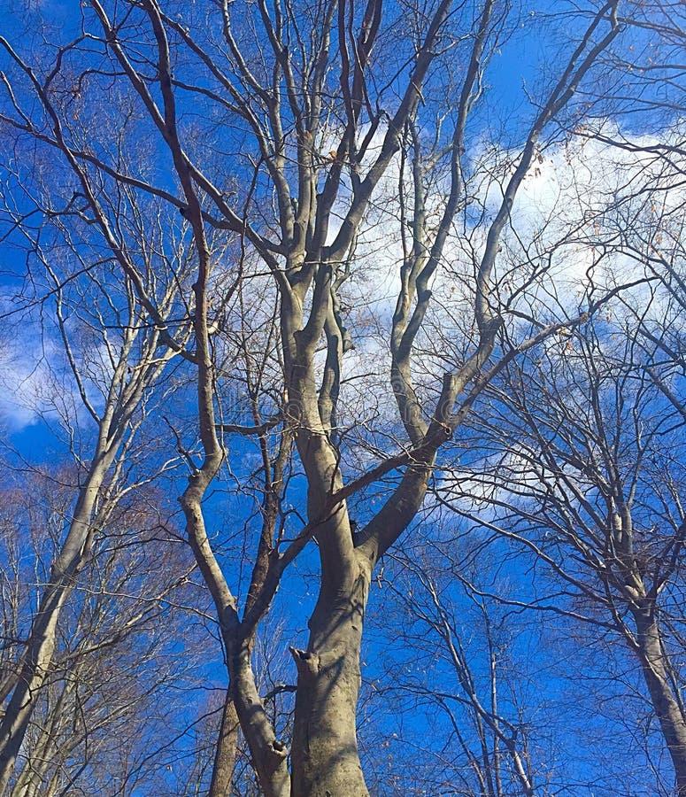 设计图象结构树冬天 库存照片