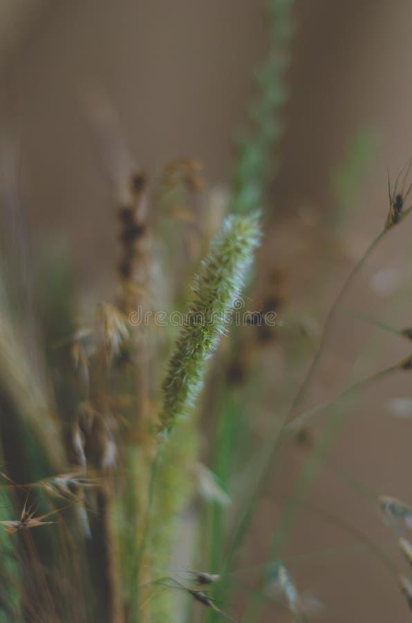 设计的强的被弄脏的背景在棕色绿的口气 干燥和鲜花和草本在一花束 ? 强的迷离 库存照片
