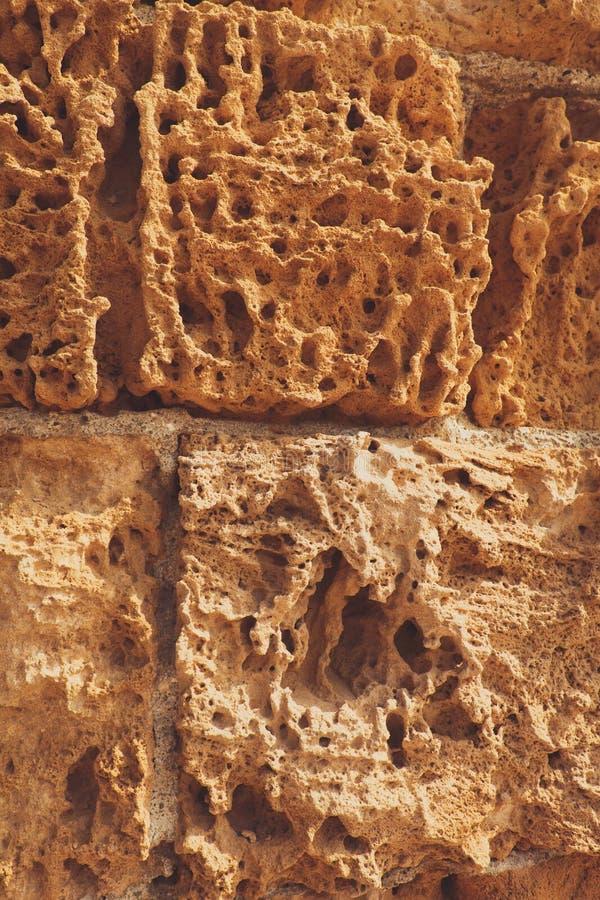 设计的背景 从自然贝类,从一件地下猎物的石头的艺术性的背景墙壁 免版税库存照片