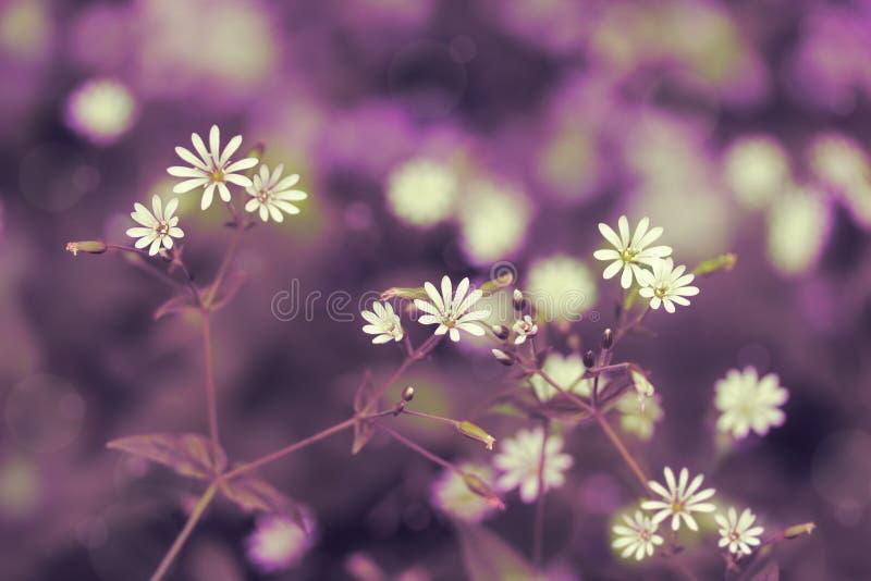 设计的被定调子的花卉背景与inscripti的一个地方 库存图片