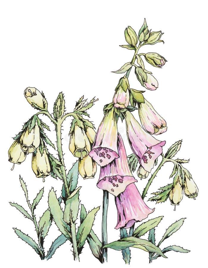 设计花卉查出的水彩白色 库存例证