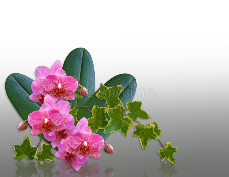 设计要素常春藤兰花 向量例证