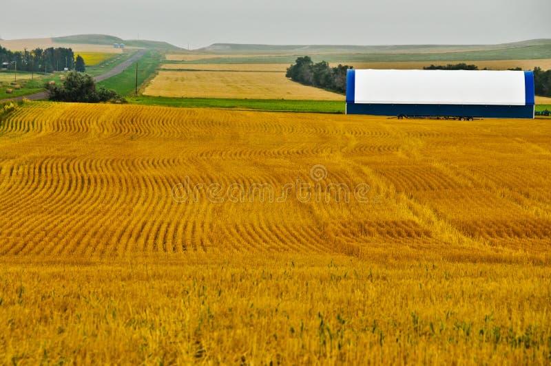 设计调遣几何金黄麦子 库存图片