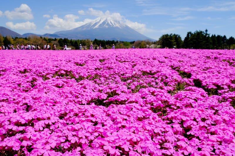 访客享用富士Shibazakura节日的花园,山梨,日本 免版税库存照片