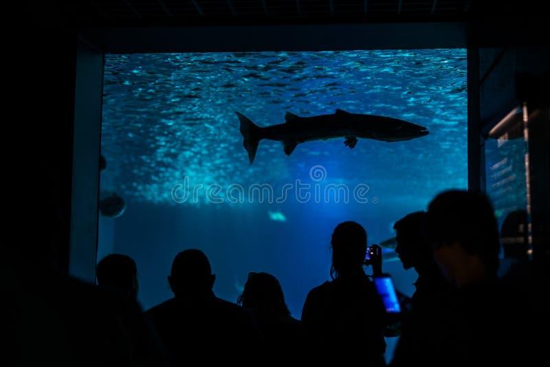 访客,一个水族馆的人们剪影有鱼的 图库摄影