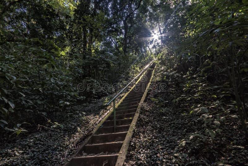 访问瀑布的楼梯在森林中间在圣丽塔做Passa Quatro, São保罗,巴西 免版税库存照片