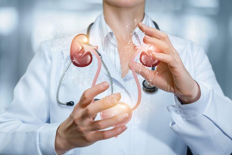 诊断的肾脏和膀胱的概念和治疗 免版税库存图片
