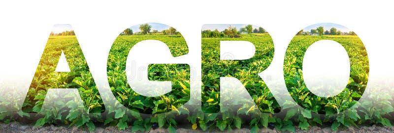 词农业在茄子种植园领域的背景 r 工农业 集成的解决方案 图库摄影