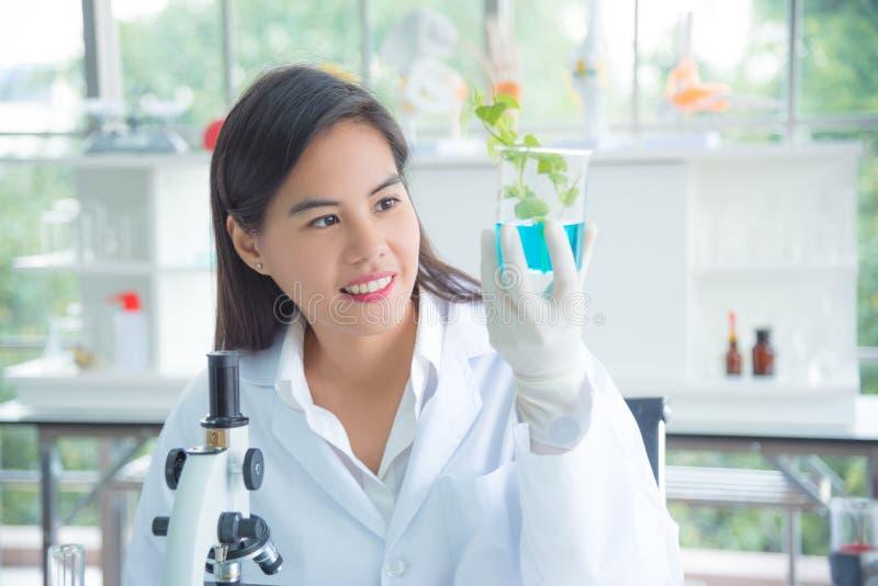 试验室工怍人员有植物的藏品烧杯在实验室 库存图片
