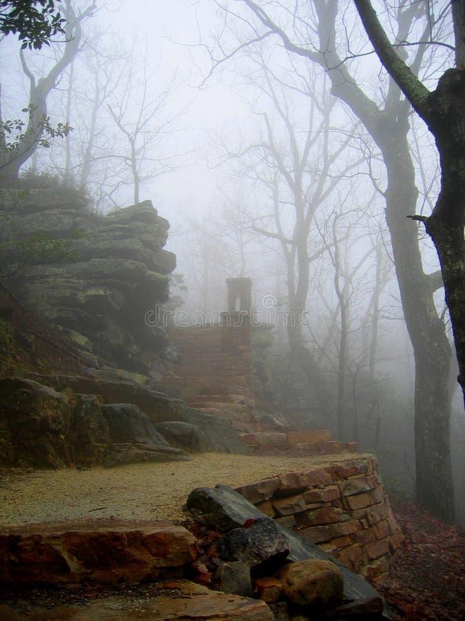 试验山有薄雾的早晨 库存图片