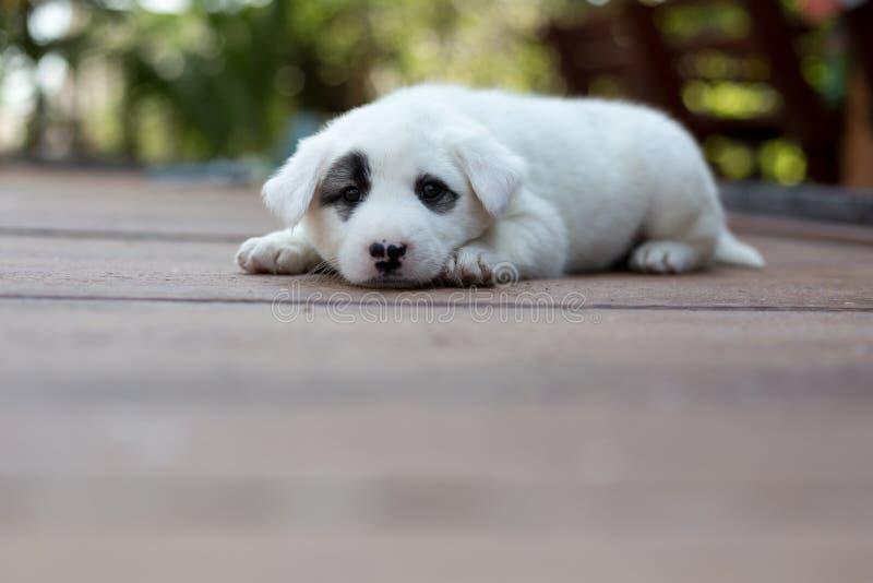 诚实的狗,小逗人喜爱的小狗 免版税库存照片