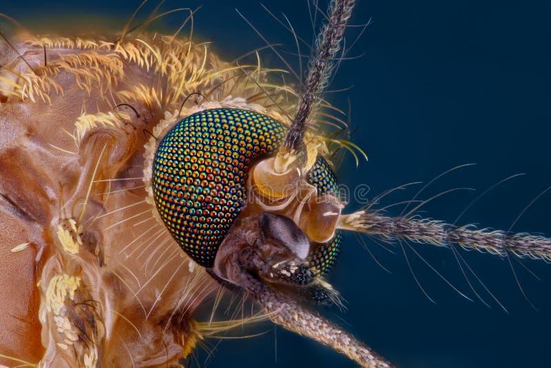 详细极其顶头蚊子锋利的研究 库存图片