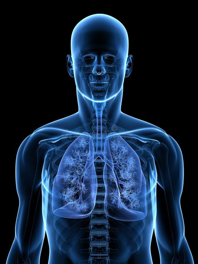 详细肺 库存例证
