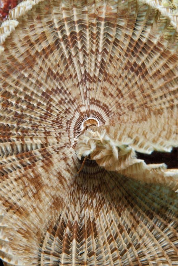 详细资料喷粉器羽毛蠕虫 库存照片