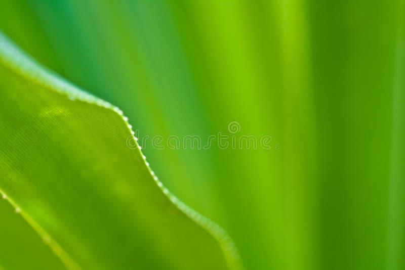 详细资料绿色叶子静脉 库存照片