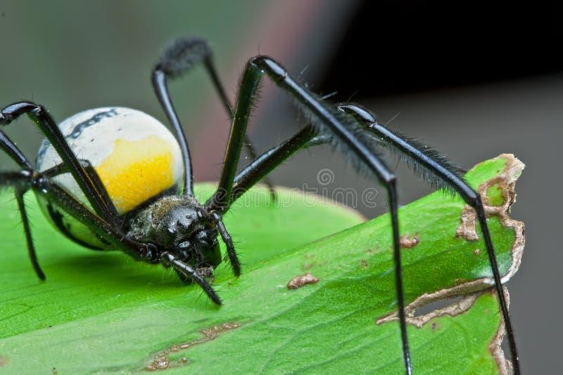 详细资料蜘蛛 免版税库存图片