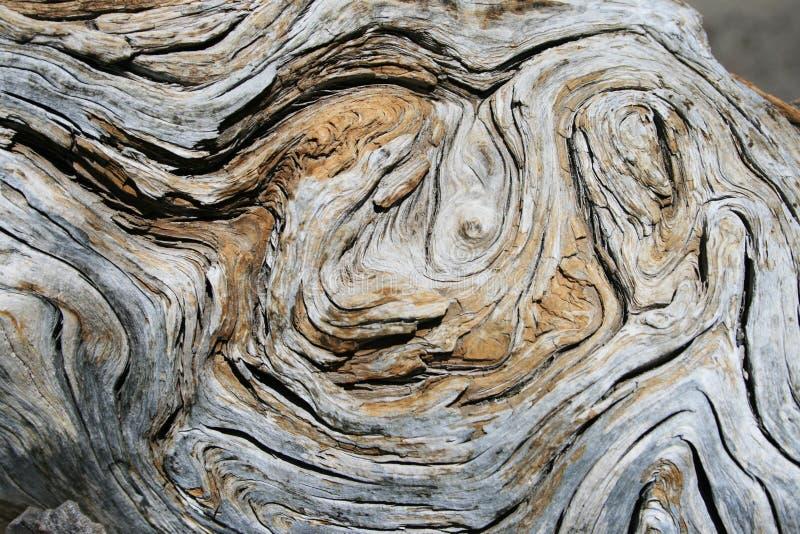 详细资料被风化的木头 免版税图库摄影