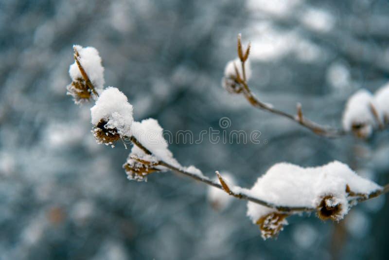 详述冬天 库存照片