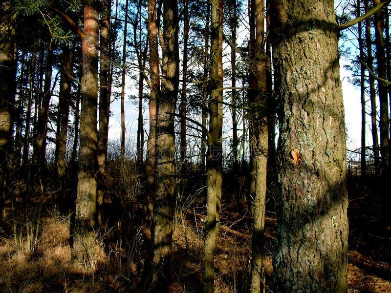 详述森林 免版税库存照片