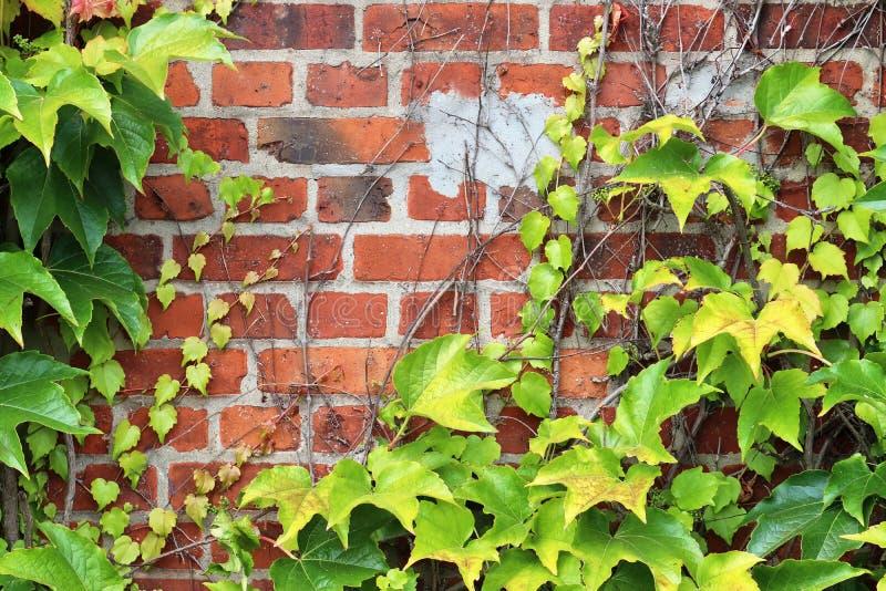 详述紧密在红色被风化的砖墙上的看法有在高分辨率的有些镇压的 免版税图库摄影