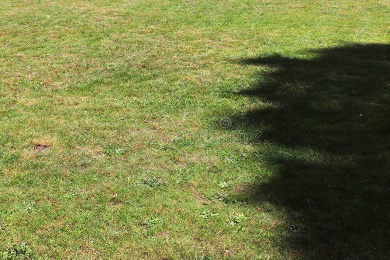 详述紧密绿草表面上的看法 免版税库存照片