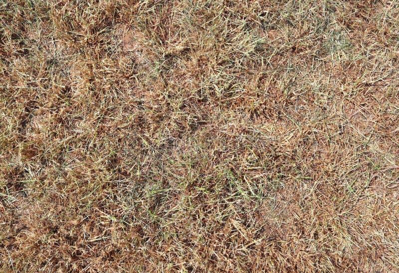 详述紧密绿草表面上的看法 免版税图库摄影