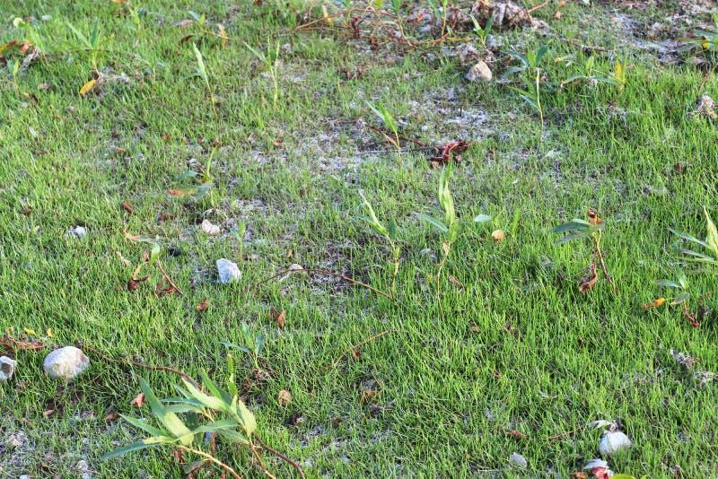 详述紧密绿草表面上的看法 免版税库存图片