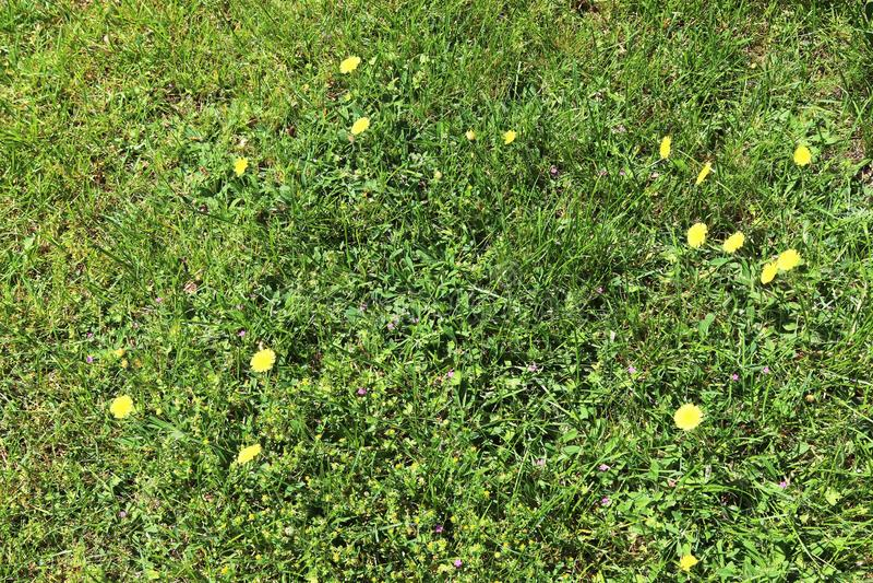 详述紧密绿草表面上的看法 库存照片