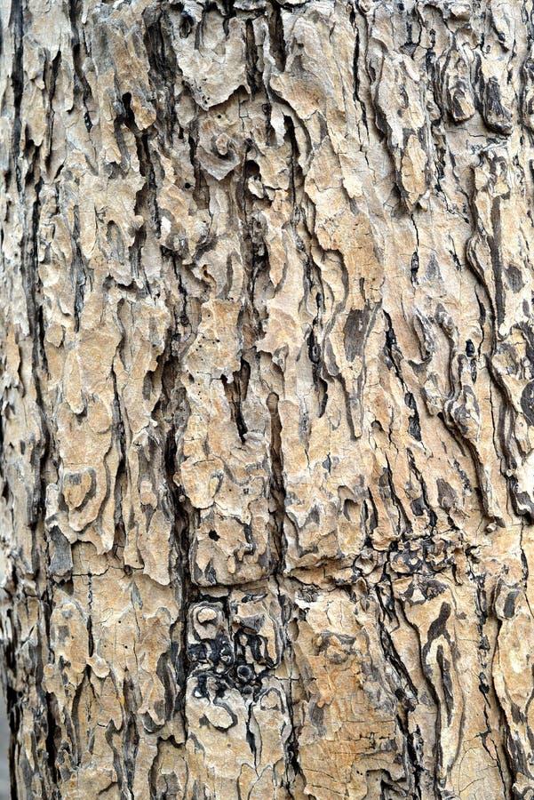 详述结构树 免版税库存图片