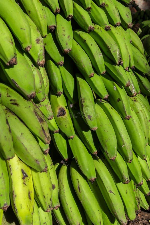 详细绿色未加工的香蕉 免版税库存照片