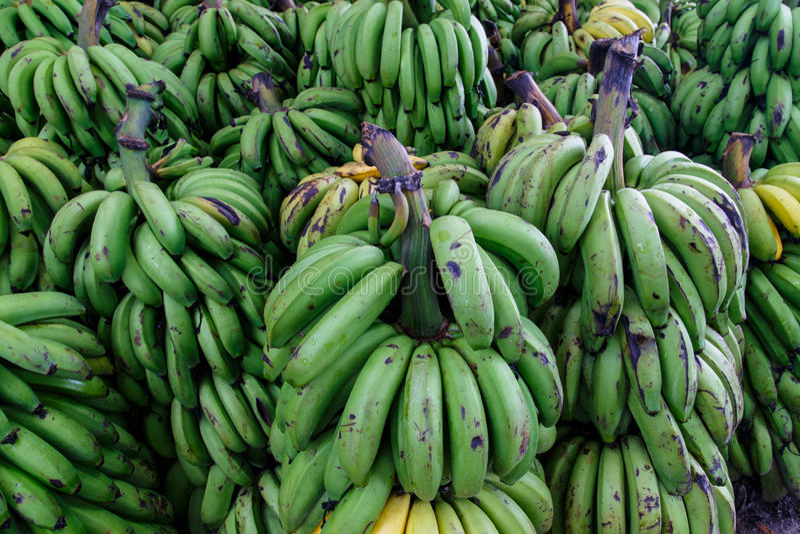 详细绿色香蕉庄稼  免版税库存照片